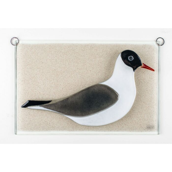 Black-headed gull, relief